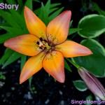 Nam's Story