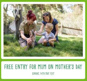 single mother survival guide, mother's day, single mum, single parent