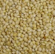 El Mijo, un cereal sin gluten ideal para celiacos