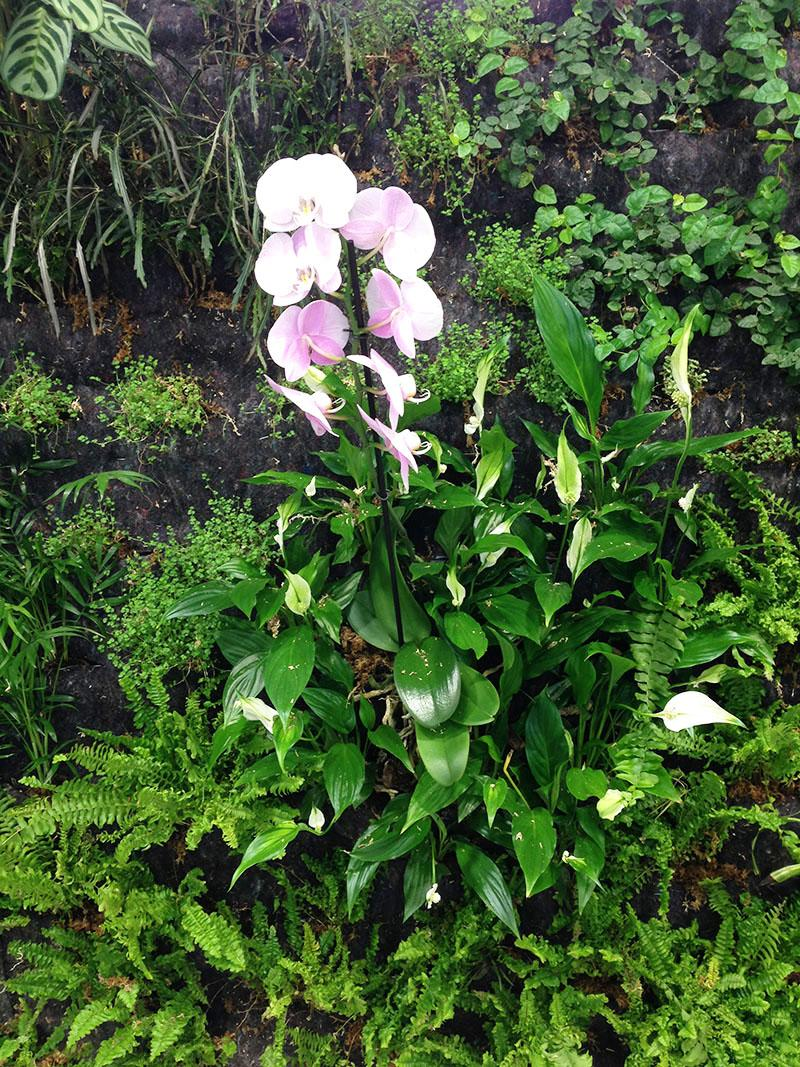 Orquídeas en jardín vertical