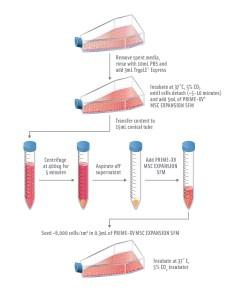 nuôi cấy tế bào