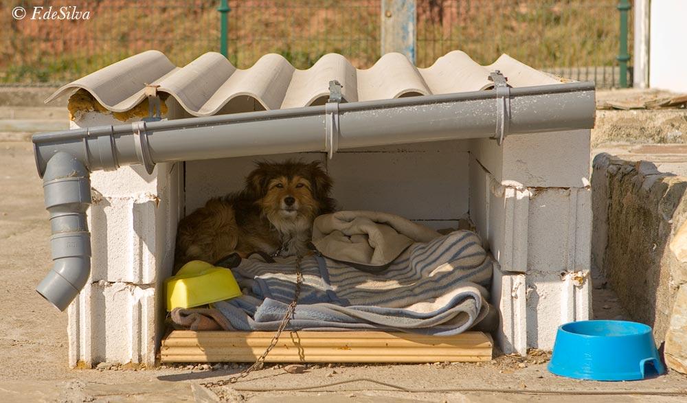 Como hacer una caseta de bloques fabulous casa para perros grandes o pequeos with como hacer - Como hacer una caseta de obra ...