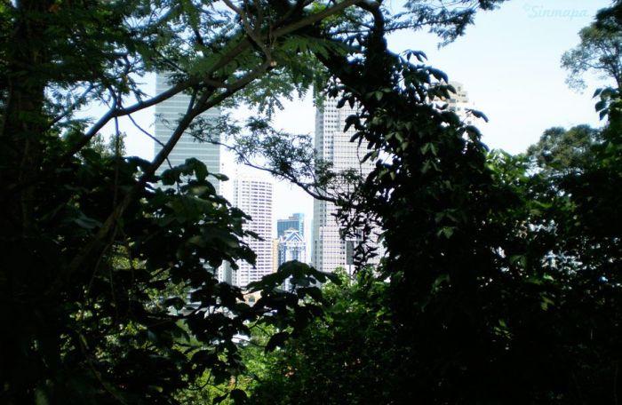 Vistas de KL desde Bukit Nanas, Malasia Kuala Lumpur - ¿Qué ver y qué hacer?