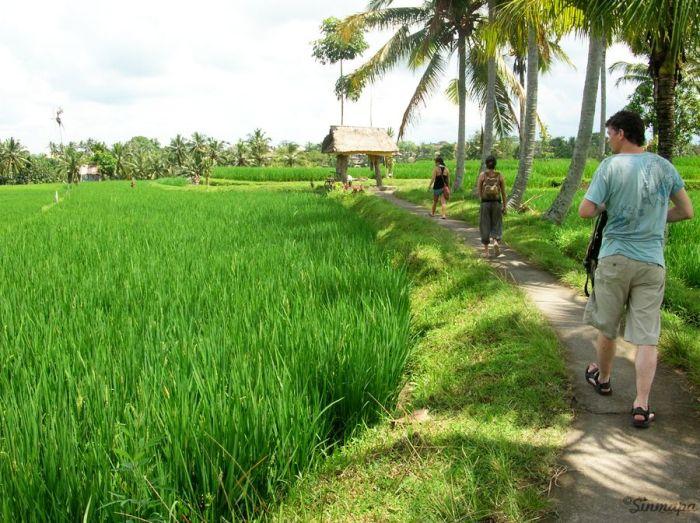 Plantaciones de arroz en Ubud