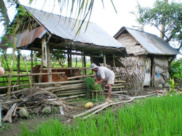 Por las terrazas de arroz en Ubud, Bali, Indonesia sinmapa.net