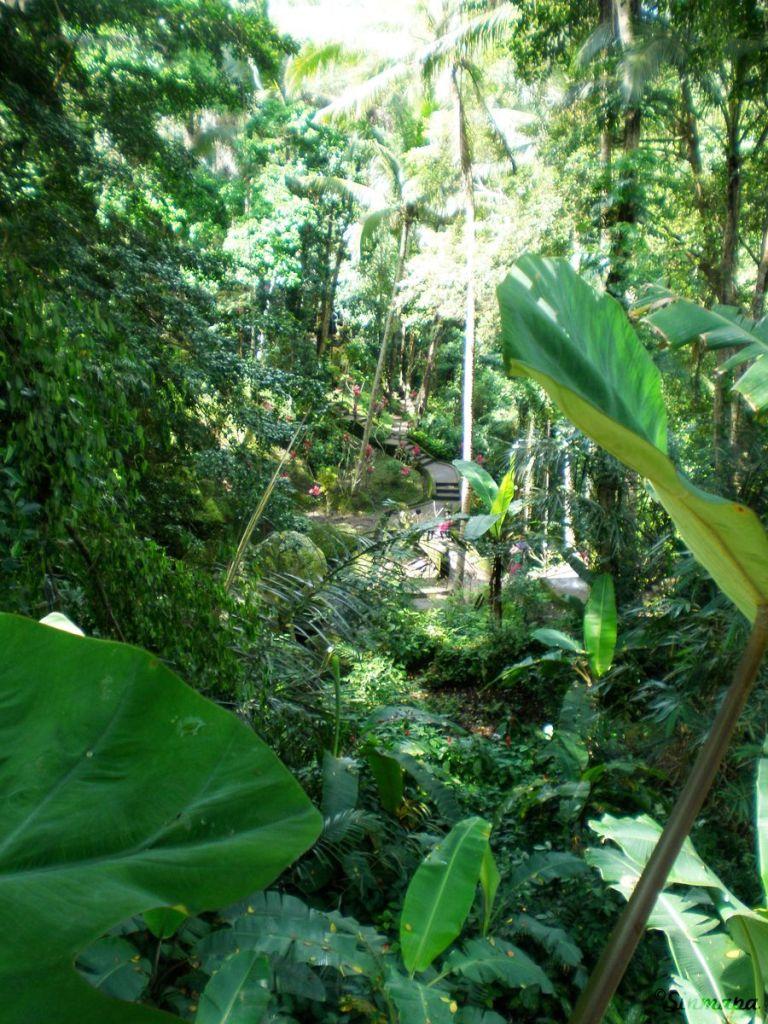 Vegetación en el complejo de la cueva de elefante en Ubud, Bali, Indonesia