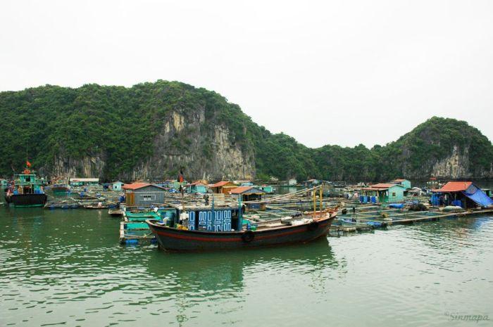 Casas flotantes en la Bahía de Halong - Vietnam