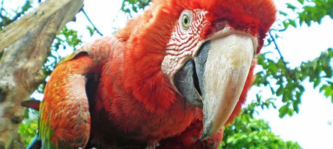 Iquitos: selva y leyendas