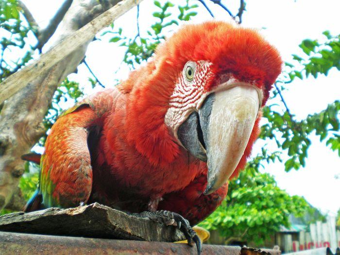 Fundo Pedrito - qué ver en Iquitos Amazonas Perú