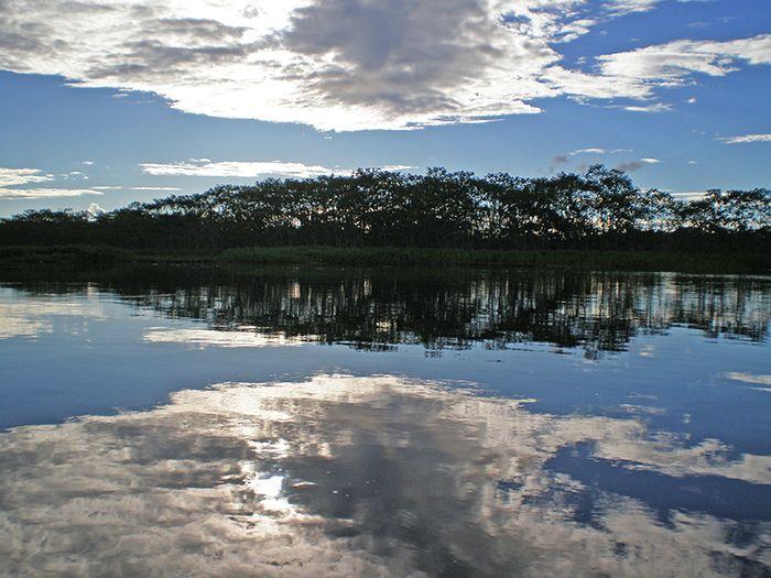 La selva de los espejos