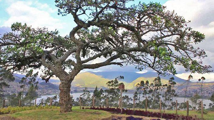 qué ver en Otavalo y alrededores Ecuador