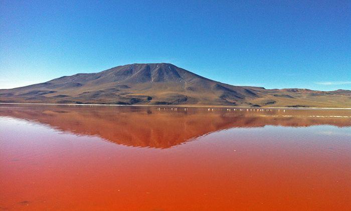 Laguna Colorada en la Reserva Eduardo Avaroa - Tour al Salar de Uyuni
