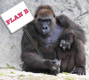 Gorila - Plan B - Foto: Glenn Pebley