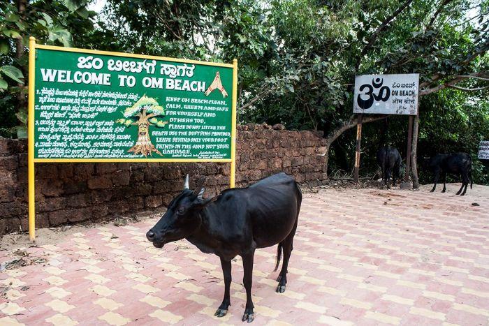 Vaca-entrada-Ombeach3