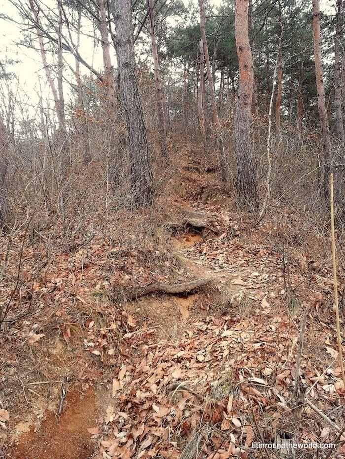 Otra foto del bosque que aterrorizó a Angie de Titin Round the World