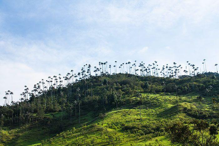 Salento y el Valle de Cocora