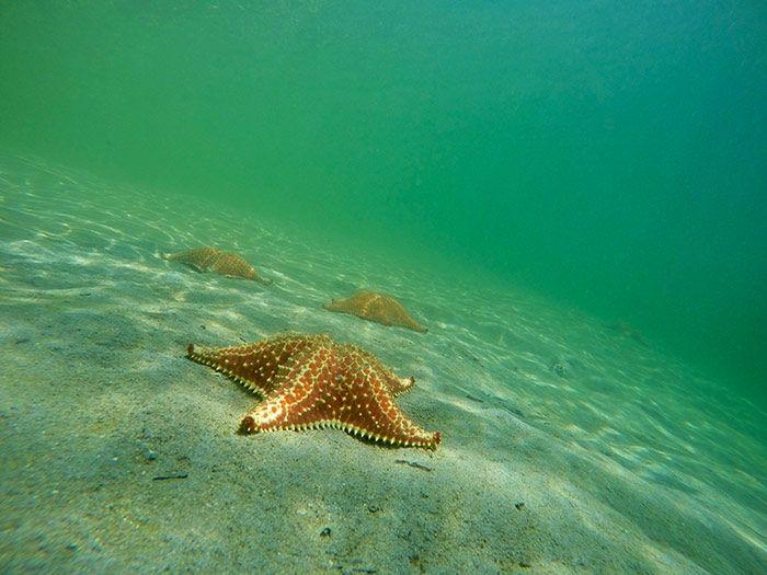 Bocas del Toro - Starfish beach - Isla Colón - Panamá