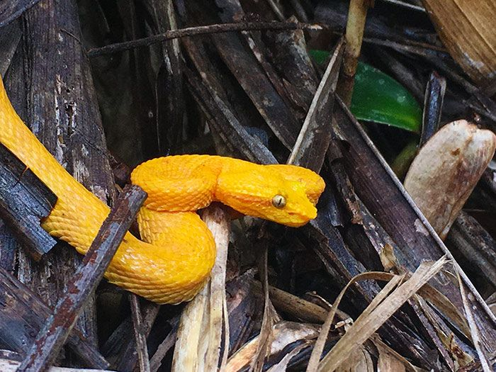 serpiente en el parque nacional