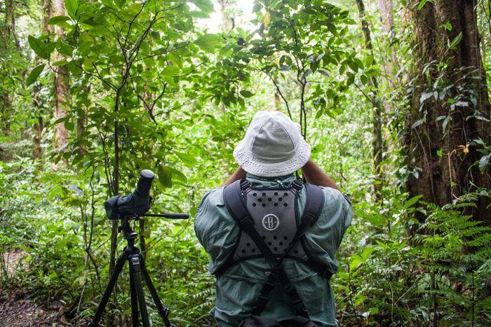 visitar el bosque nuboso - Qué ver y qué hacer en Monteverde Costa Rica