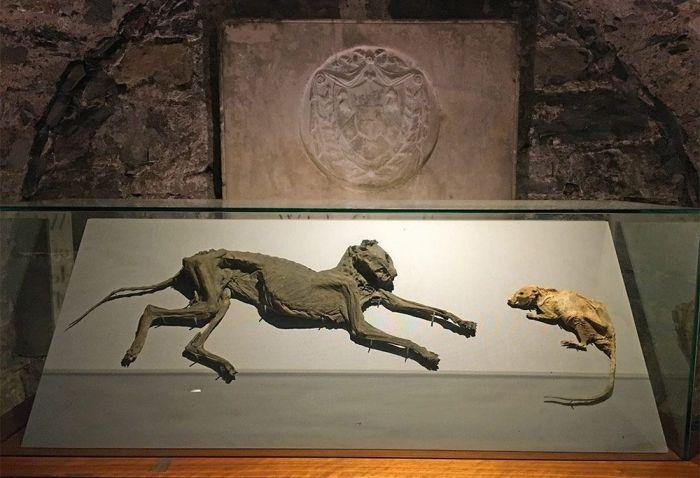 Gato y ratón momificados en la cripta del Christ Church, Dublín