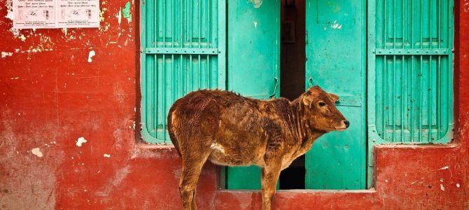Qué hacer y qué ver en Rishikesh: naturaleza, ashrams y The Beatles