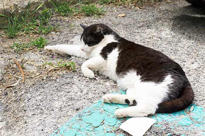 Gatito en Deià