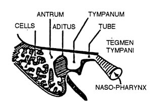 Index of /usmle2/web2/NEUROANATOMY REVIEW FOR THE USMLE_files