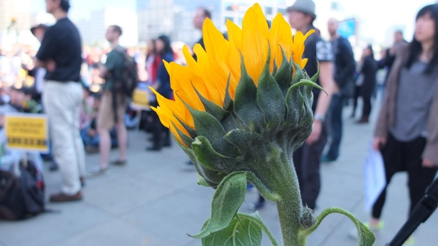 SonnenblumenBewegung Taiwans Jugend protestiert Teil 1