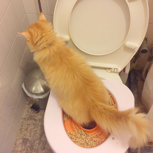 Sixth Week of Toilet training: How to do my business without Human's help