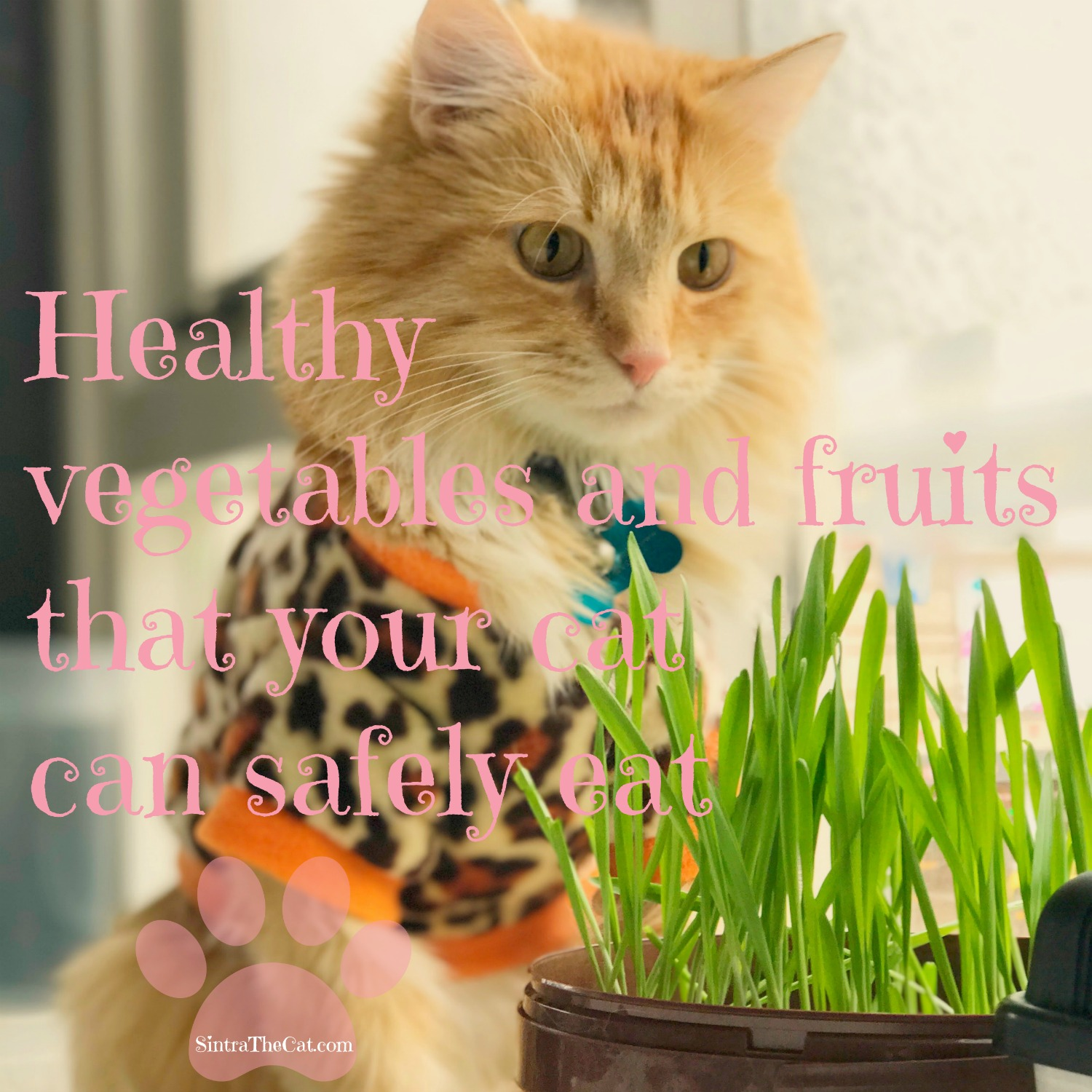Healthy vegetables and fruits that your cat can safely eat