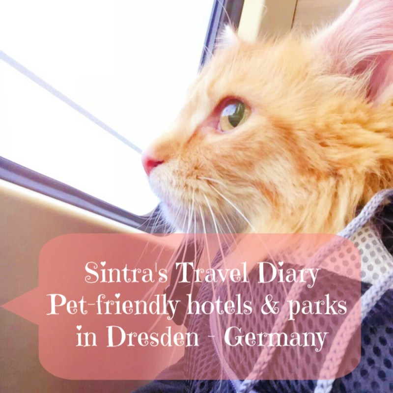 e561a2c57dba95 Sintra s Travel Diary  Pet-friendly hotels and parks in Dresden - Germany