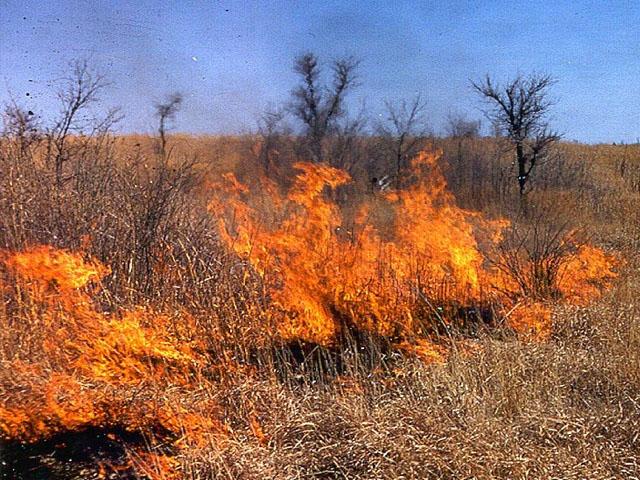 Grass Fire_1524845966518.jpg.jpg
