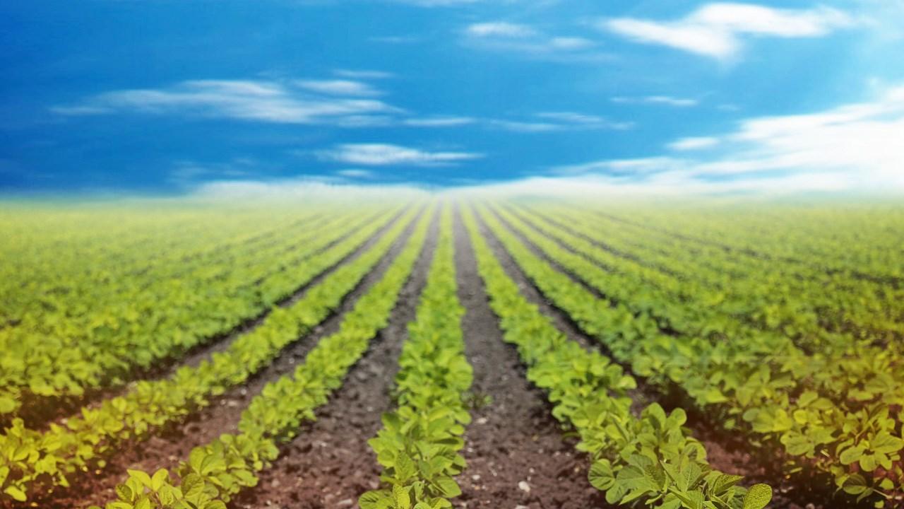 farm, land, growing, crops_1551988437754.jpg.jpg