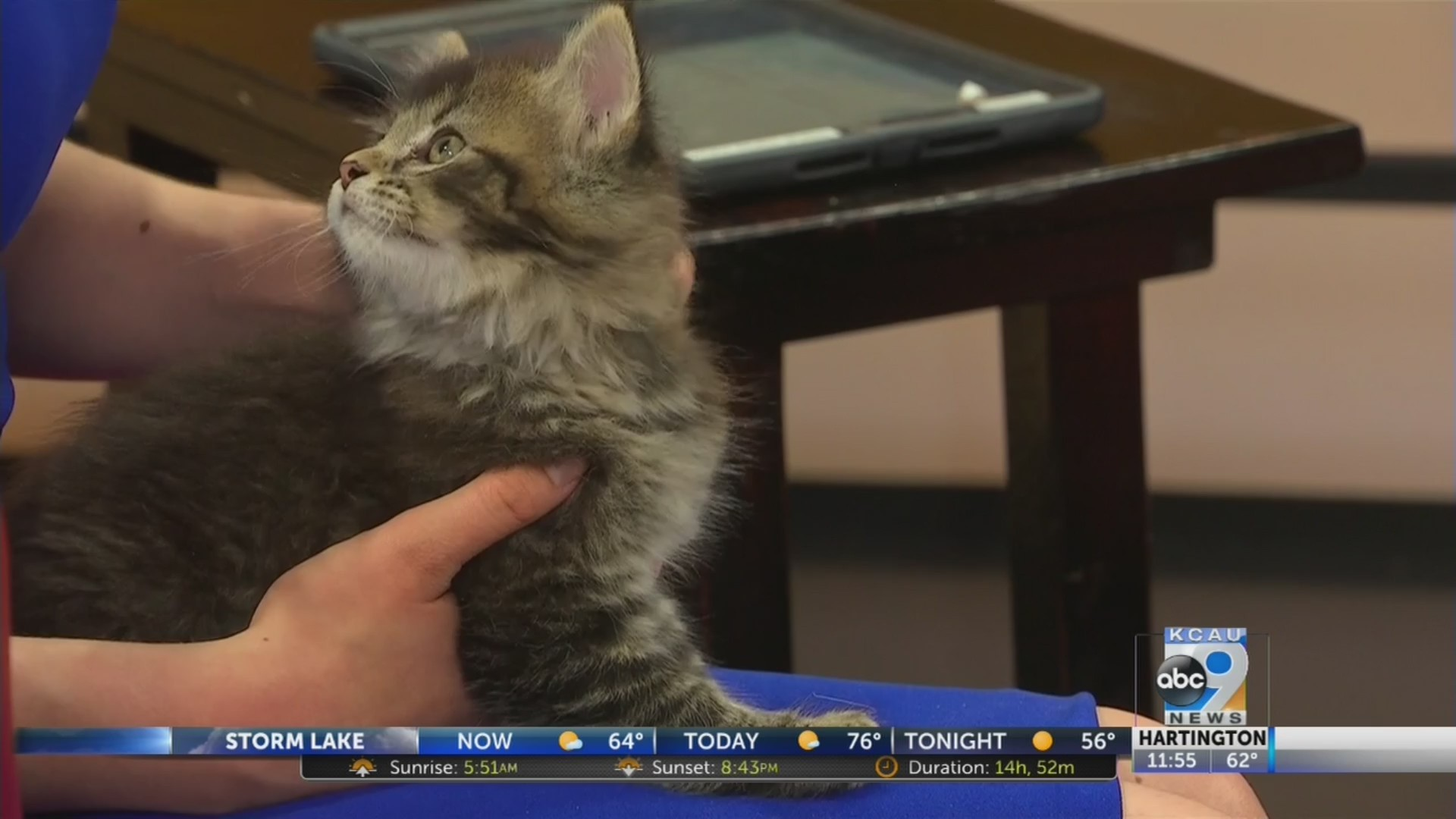 Friday pets with chris wall