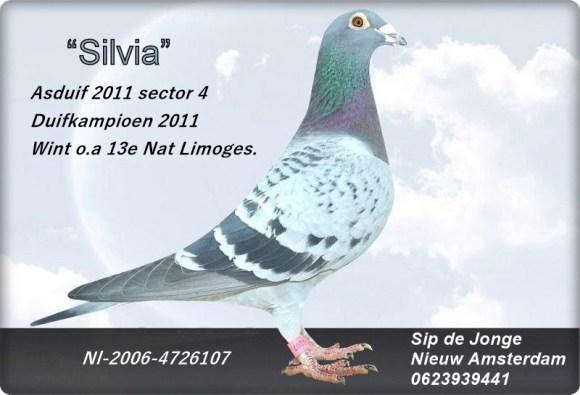 """""""Silvia"""" topvlieger en zeer goede kweker!"""