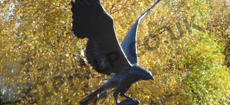 Aviemore-Bird-of-Prey-2010.jpg