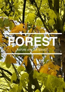 Phoster-Forest-2