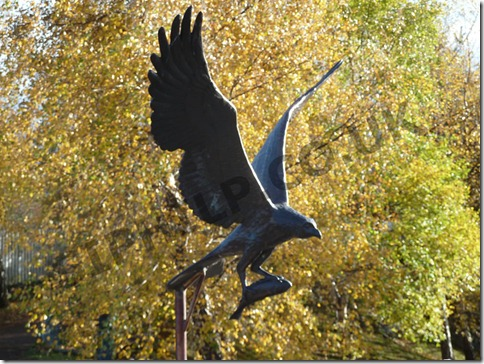 Aviemore-Bird-of-Prey-2010