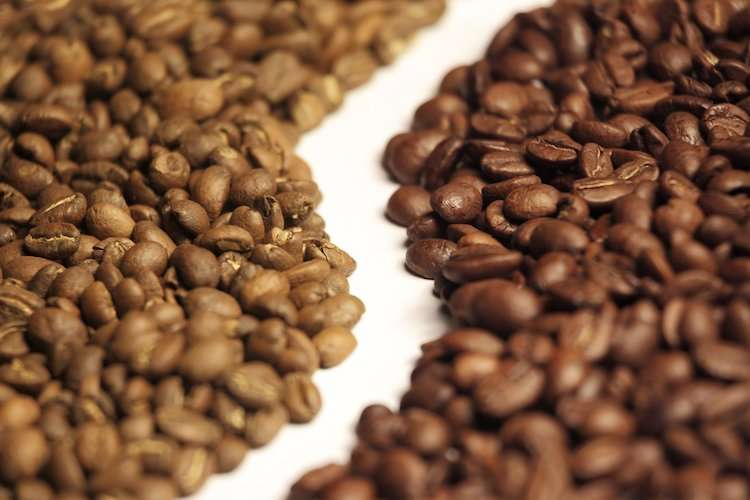 Arabica vs Robusta Coffee Beans | Sipping Duck