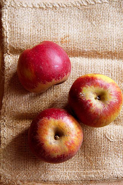 Black Twig Apples (Arkansas 1868)