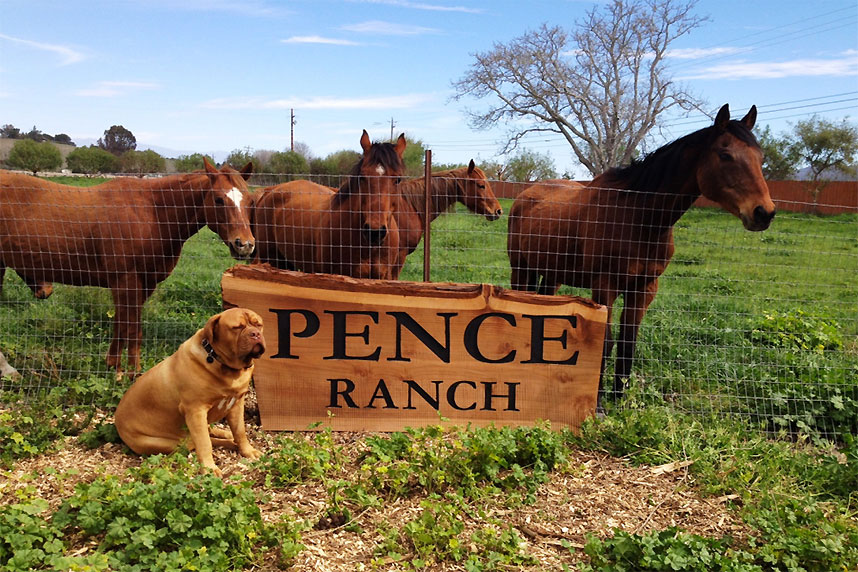 Pence Ranch Horses