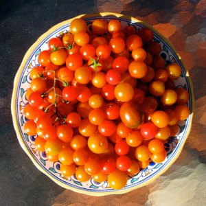cherry tomato harvets