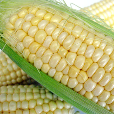fresh summer corn