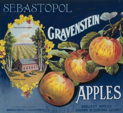 Gravestein Apples