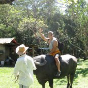 robert rides a water buffalo