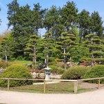 Düsseldorf Nordpark | Japanischer Garten | Outdoor Rätseltour Schnitzeljagt | Sir Peter Morgan