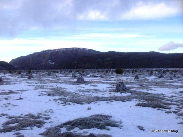 bosque-talado-ushuaia