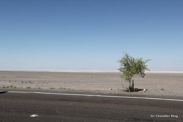 arbol-desierto-ruta-atacama