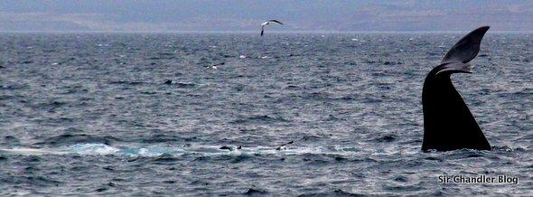 puerto-madryn-ballenas