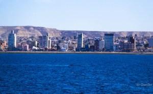 D-madryn-ciudad